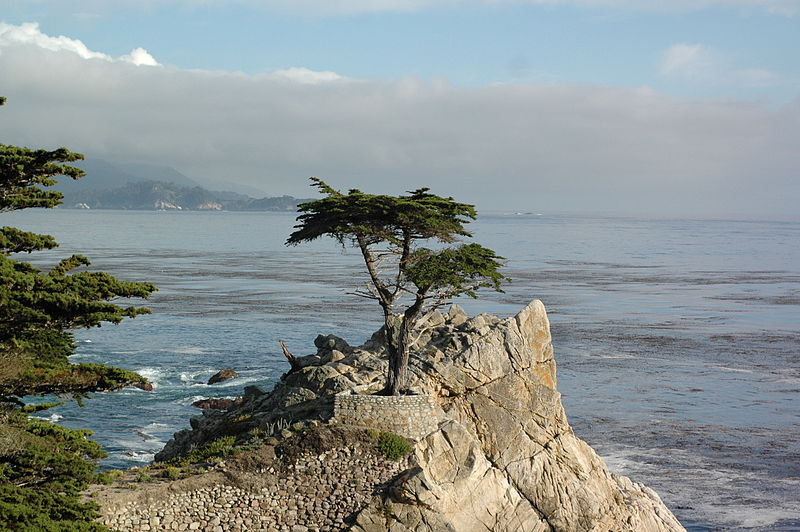 Lone Cypress Montery California