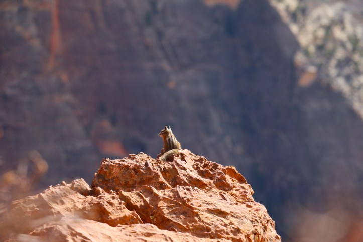 Chipmunk at Zion National Park